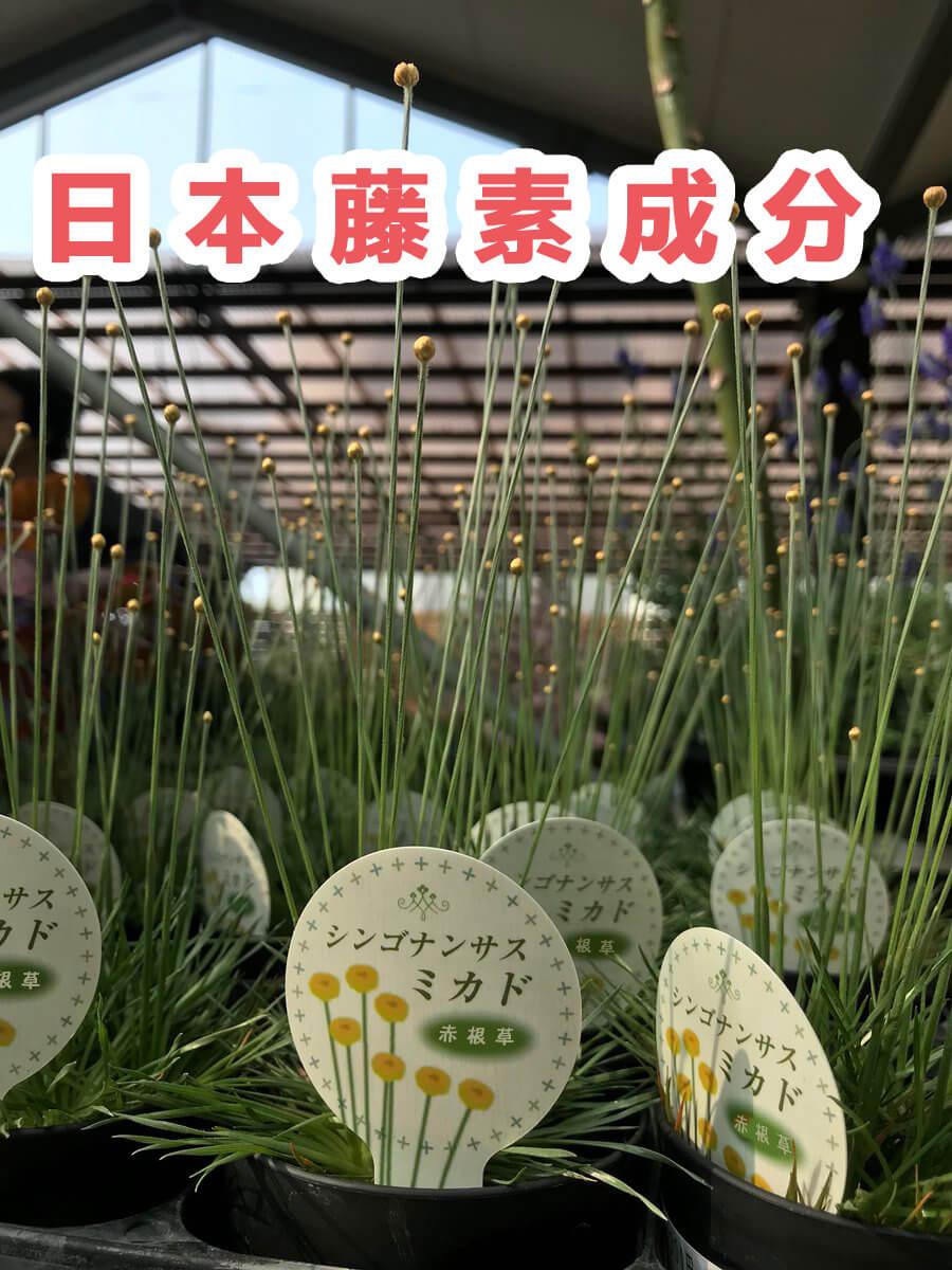 日本藤素成分